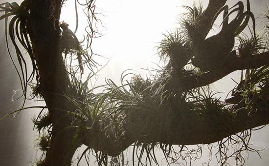 Освещение растений в зимний период
